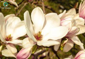 Kathrin Link Fotografie, Natur