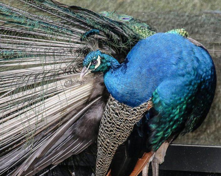 Kathrin Link Fotografie, Natur und Tiere